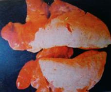 感染病的猪肺对称性肉样变.png